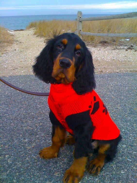 Chester in Red Coat MV