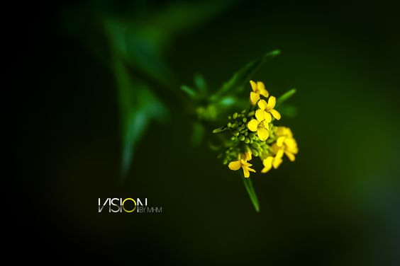 taken by with 135mm f/2 L Canon lens and EOS 6D