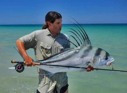 The fly roosters and fish on pinterest for Rooster fish pictures