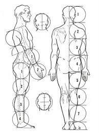proporção do corpo humano - Pesquisa Google