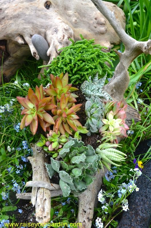 Succulents And Driftwood Driftwood Planters Succulent Planters
