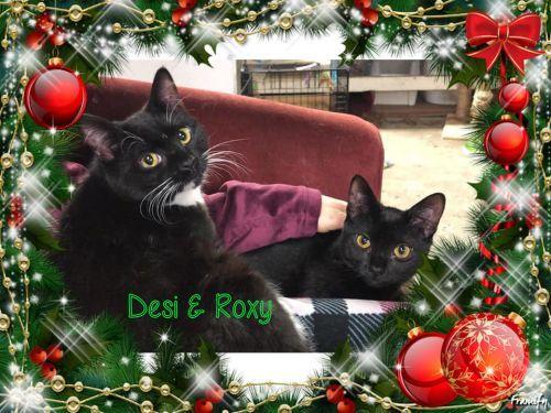Our Adoptables Home Rescue Cat Adoption Rescue