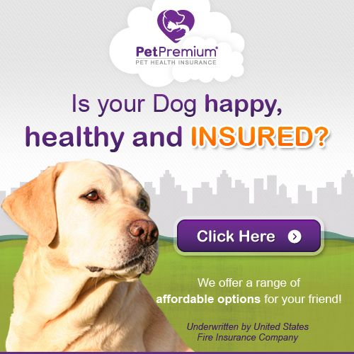 Keep Your Dog Or Cat Happy Healthy And Protected Did You Know About 80 Of Dogs And 70 Of Cats Will Experience Some Form Of Or Pet Insurance Quotes Pet Insurance