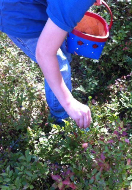 Geht mit Euren Kindern Beerensammeln und Äpfel pflücken!