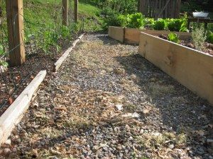 Who would have thought vinegar was good to kill weeds?