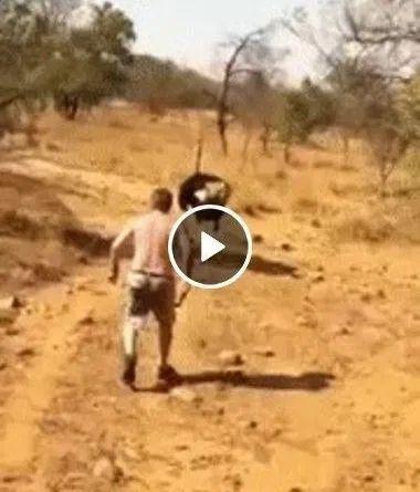 Foi cutucar o avestruz com vara curta e se deu mal