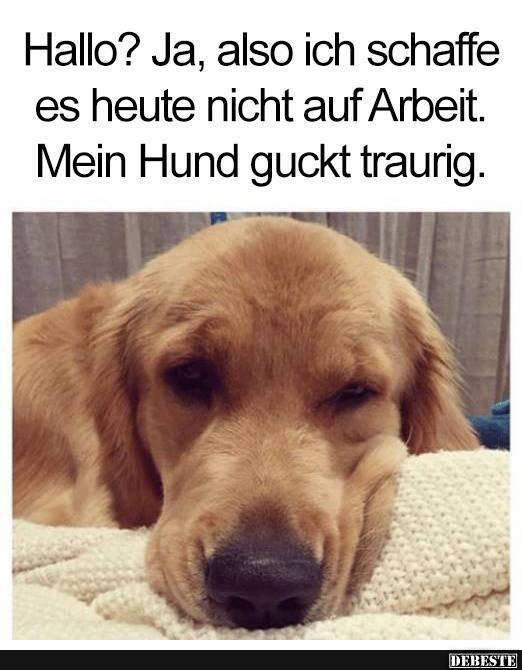 Hallo Ja Also Ich Schaffe Es Heute Nicht Auf Arbeit Lustige Bilder Spruche Witze Echt Lustig Hund Witze Lustige Hund Bilder Lustige Hunde
