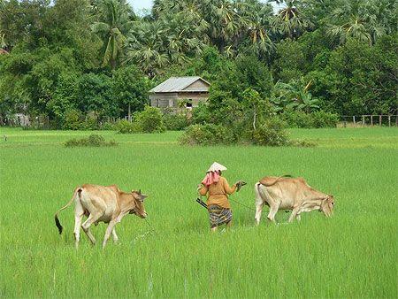 La campagne près d'Angkor
