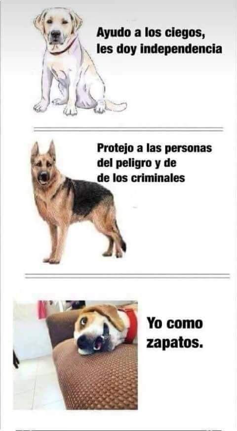 Pin De Patricia Orellana Quijije En Perritos Perros Graciosos Memes Perros Memes De Perros Chistosos