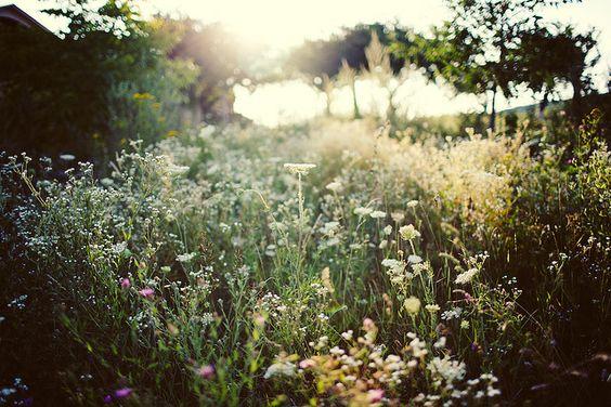 Ukraine countryside.