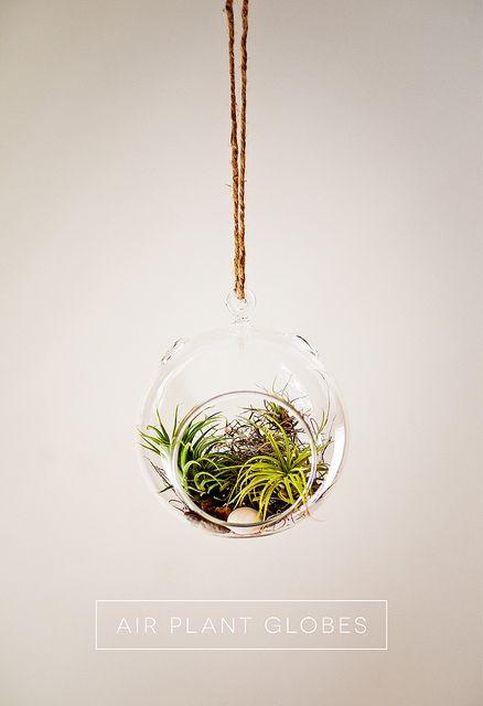 Air Plant Globe Terrarium
