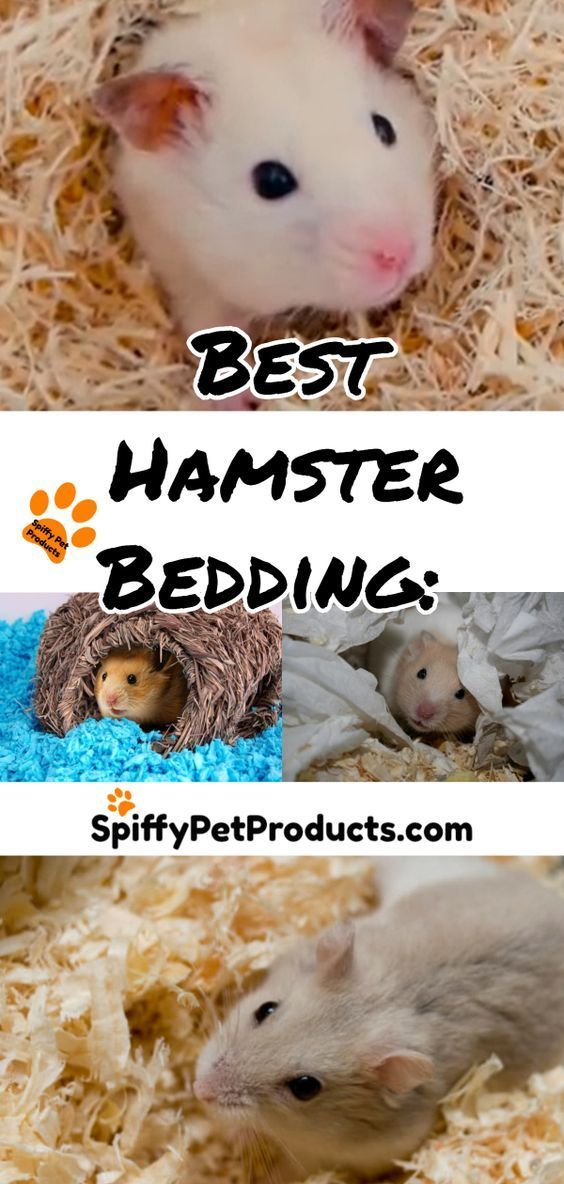 Best Hamster Bedding The Ultimate Guide For Syrian Robo Dwarf Hamsters 2020 Hamster Bedding Robo Dwarf Hamsters Hamster Habitat
