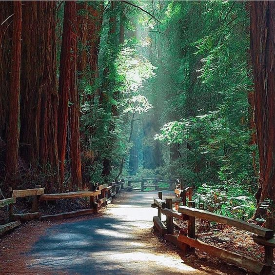 """Muir Woods National Monument, California, USA #TourThePlanet Photography by @mirajmohsin"""