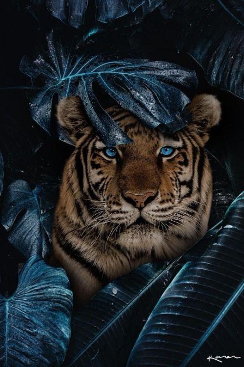 Maureen2musings Magic Of Nature Karencantuq Fond Ecran Animaux Photo Animaux Art Des Animaux Sauvages