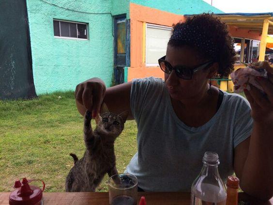 Gato abusado em Cabo Polônio