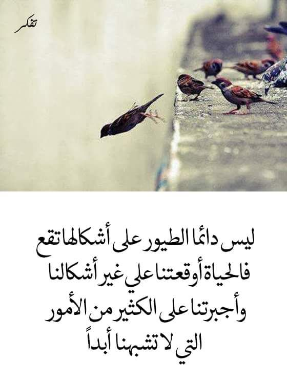 Pin By صورة و كلمة On كلمات راقت لي Quotes Lovely Quote Quotes Arabic Calligraphy