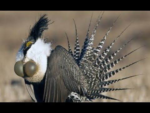 Suara Burung Merdu Dan Alam Liar Untuk Terapi Dan Rileksasi Dan Ketenang Burung Suara Alam