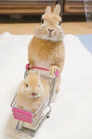 【保存したら負け!】おもしろ画像・可愛い画像・猫など動物の癒される面白画像まとめ【Vine動画】 - NAVER まとめ