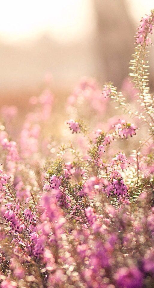 Floral spring iphone wallpaper iphone wallpapers pinterest nature spring and style - Backgrounds springtime ...