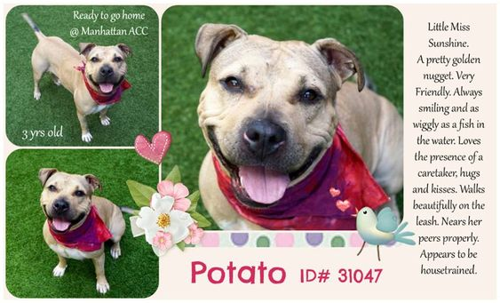 Image May Contain Dog And Text Dogs Nyc Dogs Pet Adoption
