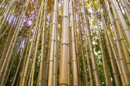 How to Make Bamboo Screens