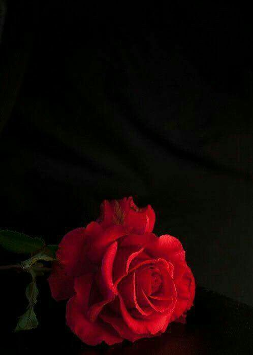 Fond D Ecran Rouge Fond D Ecran Fleur Rose Fond D Ecran Telephone Fond D Ecran Rouge