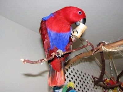 Gini's BIRDIEBREAD™ Cones and Muffins are made of all Human grade, mostly natural and Organic ingredients, many locally grown. They are a ready to eat food treat and toy for your parrot or exotic pet bird from finches to Cockatoos!