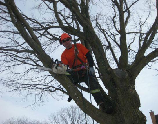 Expert Tree Trimmers, Cutters & Tree Pruners In San Antonio, TX