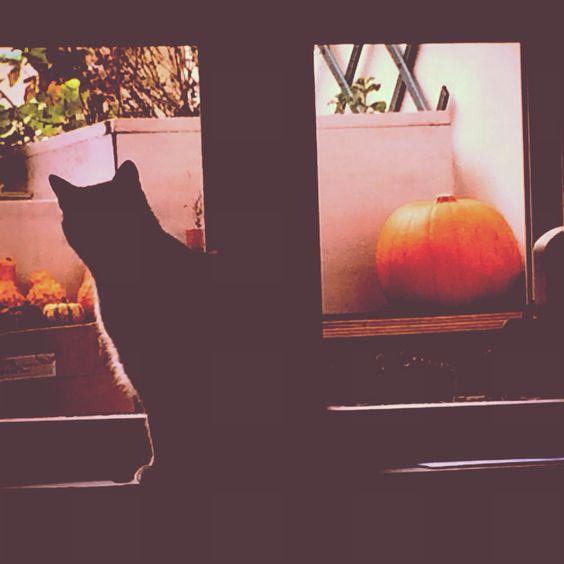 Mon chat en automne ❤️