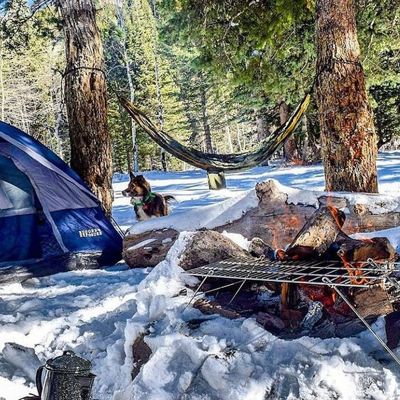 Everyday is a new day for a new adventure PC: @mirandashea24  #hammock #hobohammock #hammocklife #hammocktown #hammocking #winter #tent #dog #fire #onelove  #goodvibes by @hobohammocks