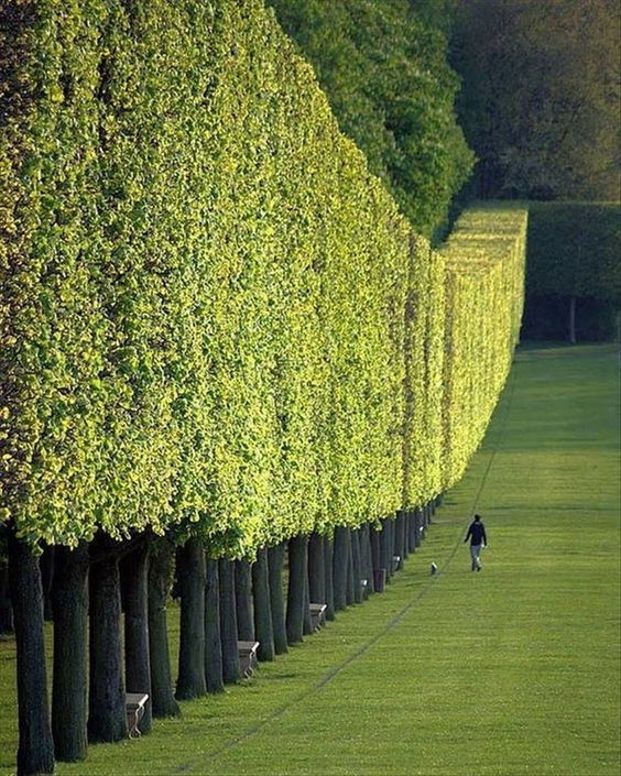 2. A tree wall in Paris - Happy Worthy Life. Creativity - Wonder - Inspriration - Art