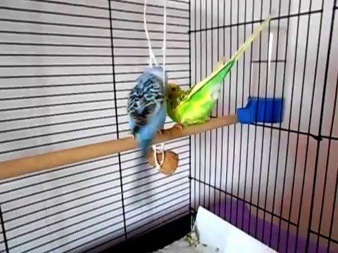 طيور البادجي Youtube Animals Make It Yourself Videos