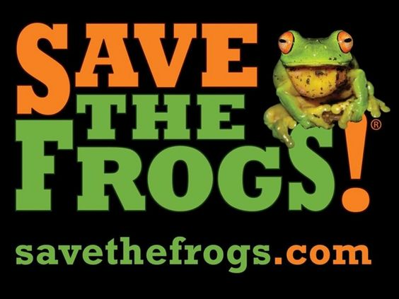 In September 2016, SAVE THE FROGS! will lead an international team of 8 amphibian biologists and frog enthusiasts on the inaugural SAVE THE FROGS! Ghana Expedition. The mission of the expedition is to protect Ghana's amphibian populations, empower the next generation of Ghanaian frog conservationists, and expand the international network of environmentalists interested in protecting West Africa's endangered amphibians and ecosystems.