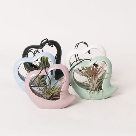 Christmas Love Air plant Gift - Send your love to someone special - Delivery in first week of December or before - Air plant heart can be hung or left standing - Ideal Christmas Present for Girlfriends, Mothers, Sisters and Friends - Tillandsia (1, Multi)