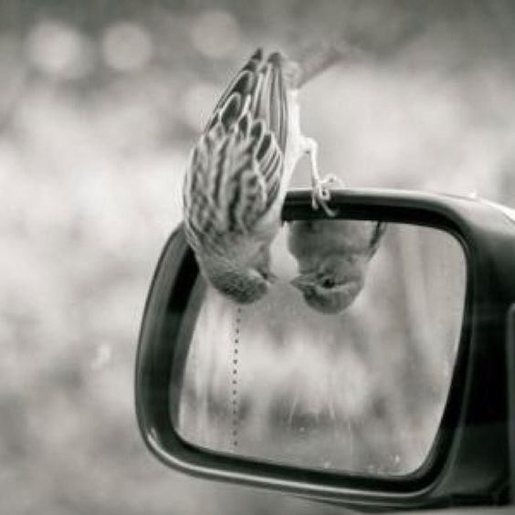 This is adorable. Objects in mirror are closer than they appear :)
