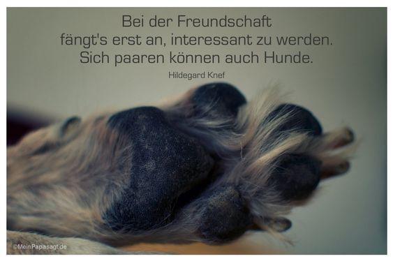 Mein Papa sagt...  Bei der Freundschaft fängt's erst an, interessant zu werden. Sich paaren können auch Hunde.  Hildegard Knef    Weisheiten und Zitate TÄGLICH NEU auf www.MeinPapasagt.de