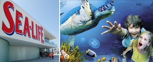 Portugal+Travel+Tips | Sea Life opened in Porto in June 2009