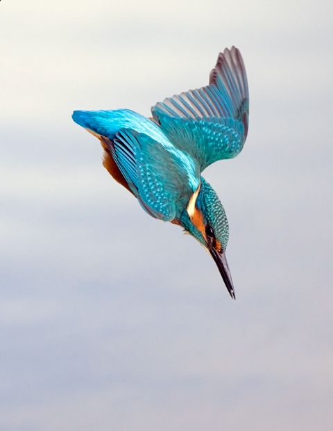 The miracle of flight: how birds, bats and bugs do it - Australian Geographic: