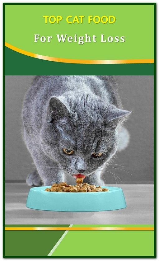 Best Cat Food Top Tips And Practical Advice Every Cat Owner Should Hear Cat Food Recipe Homemade Diy Best Cat Food H Best Cat Food Cat Food Cat Allergies
