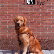 """Orla right before she left the The Seeing Eye to go live with her new master.  An excerpt from a letter Woman Within received from the organization.  """"You have forever changed someone's life with your unselfish gift of raising a dog guide"""""""