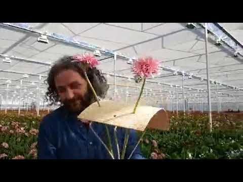 Recordings Of The Livestream With Pim Van Den Akker At Lg Flowers Youtube Flowers Flower Arrangements Gerbera