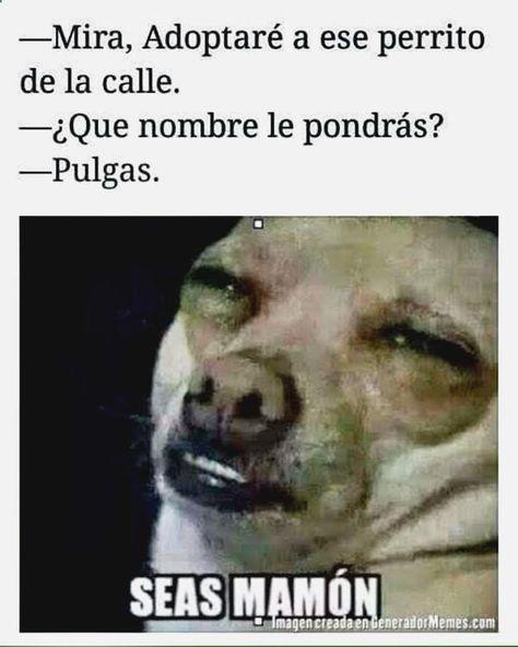 Memes En Espanol Groseros Adultos Memes En Espanol Groseros Memes En Espanol Memes Nuevos Memes Chistosisimos