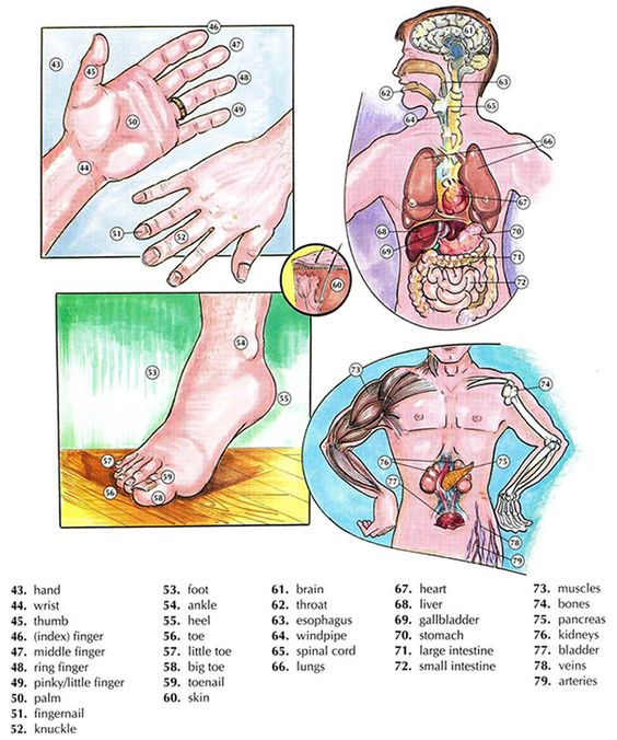 Learning the body and anatomy vocabulary using pictures