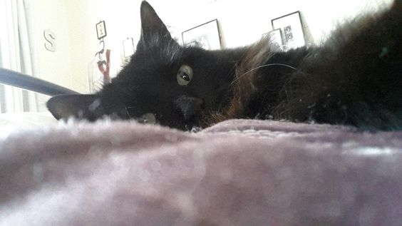 Cat Selfie (kinda!)