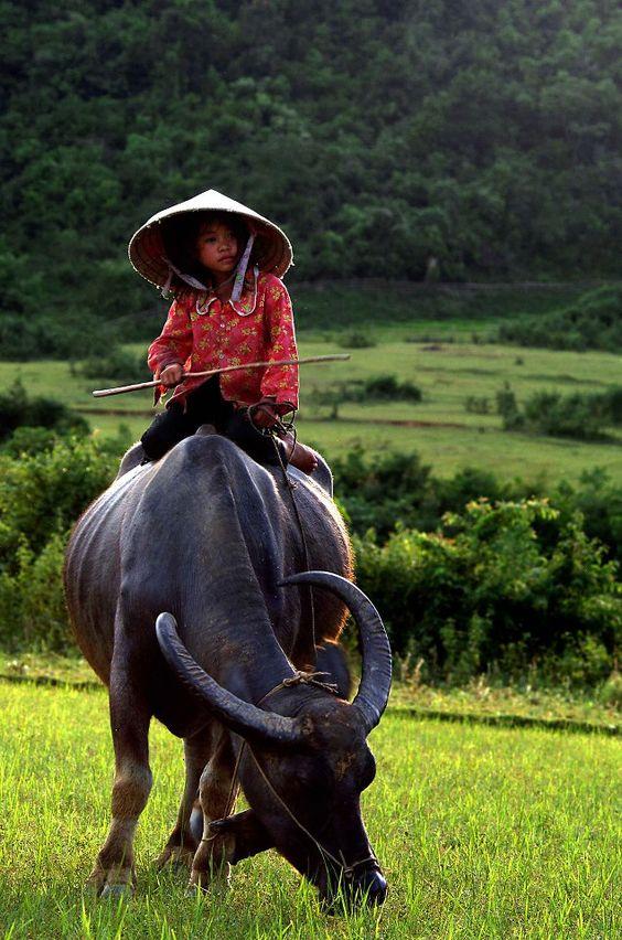 Vietnam                                                       …