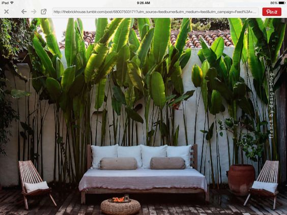Simple modern tropical backyard