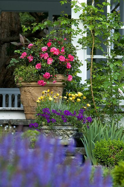 Flower Carpet Pink in container on front steps | Flickr