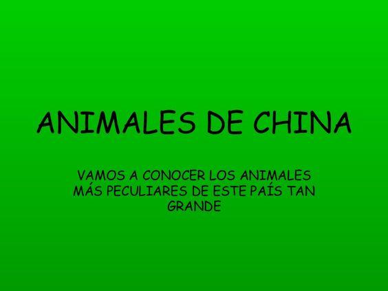 ANIMALES DE CHINA VAMOS A CONOCER LOS ANIMALES MÁS PECULIARES DE ESTE PAÍS TAN GRANDE