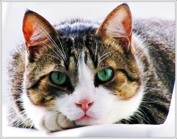 """""""O GRITO DO BICHO"""": Gatos neutralizam energias negativas ou as colocam... #ogritodobicho#falabicho"""