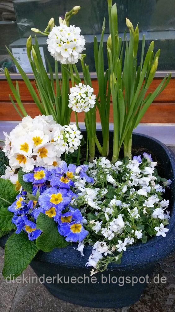 Aldi Pflanzkübel mit Frühlingsblumen